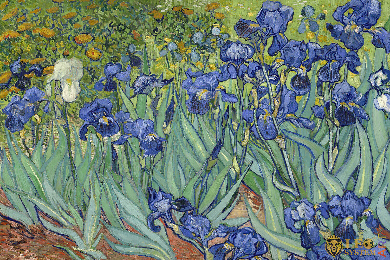 Irises, Vincent van Gogh, 1889, Original painting
